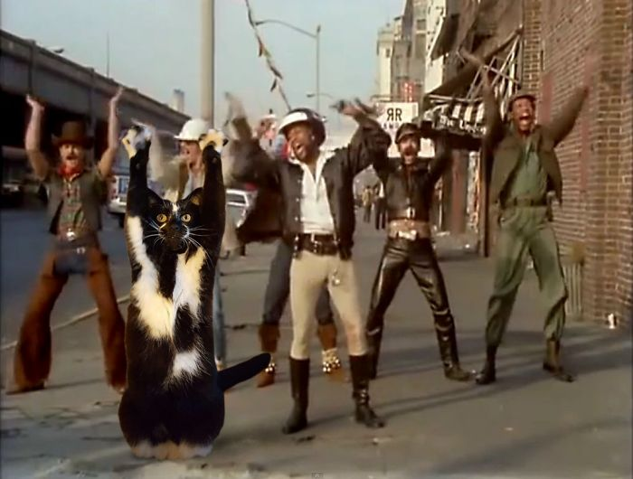 Village People (and Cat)