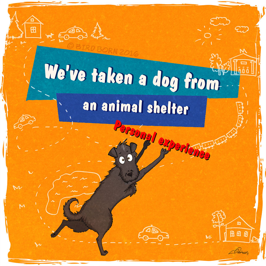 experience of working in an animal shelter Animal lovers have a variety of volunteering opportunities at their fingertips whether you'd like to work in conservation or welfare, at home or abroad, there's an placement to suit you if.