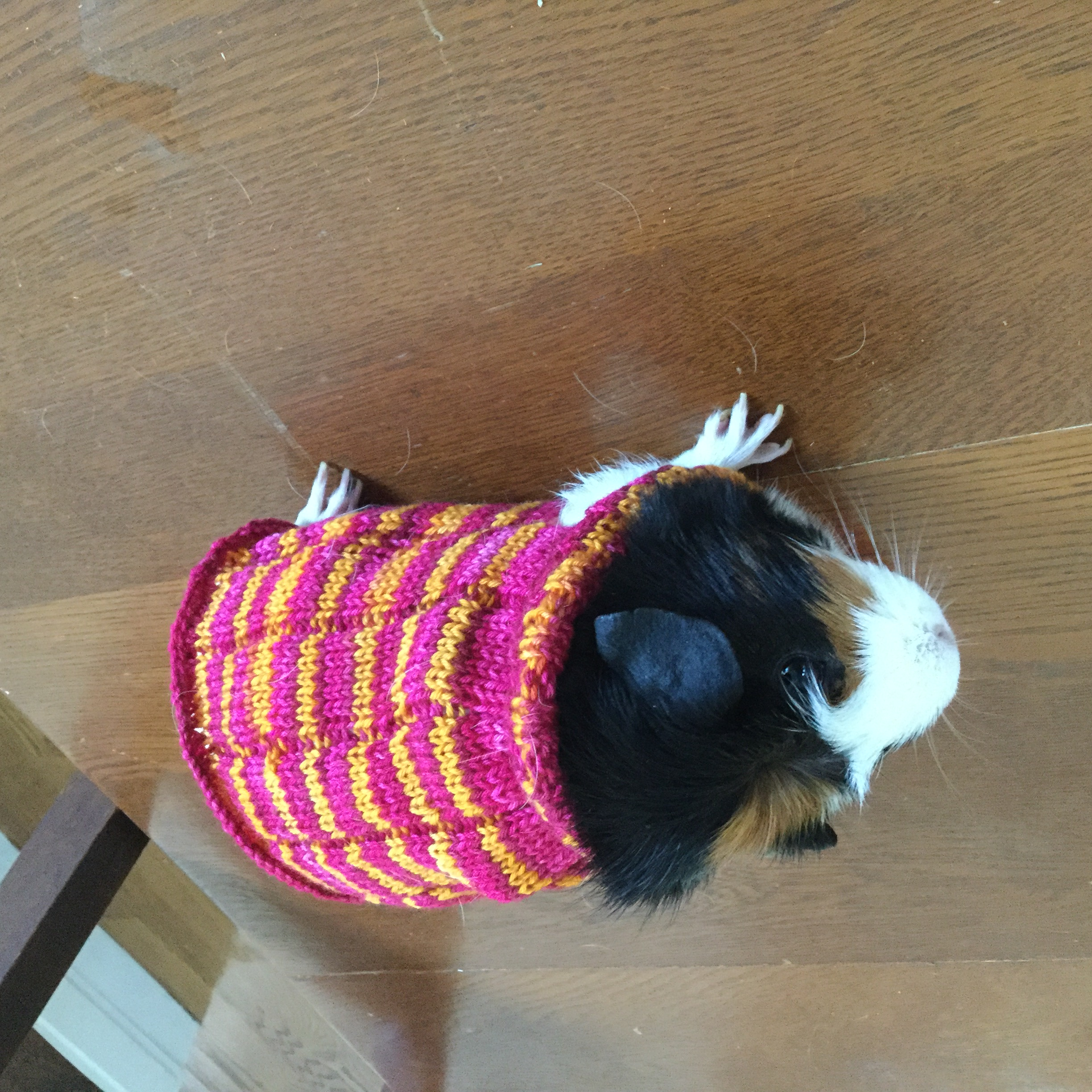 Guinea Pig Sweater Knitting Pattern : I Knit My Guinea Pig A Sweater Bored Panda