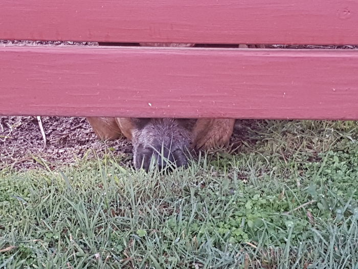 I Can See You.... But Can You See Me??