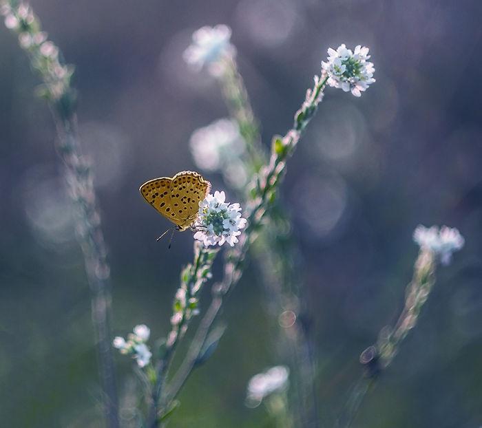 The Beautiful Nature 3123213-57a4fd514b27d__700.jpg