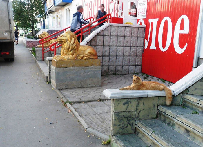 Three Golden Lions
