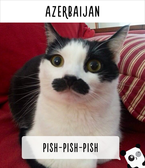 How People Call Cats In Azerbaijan