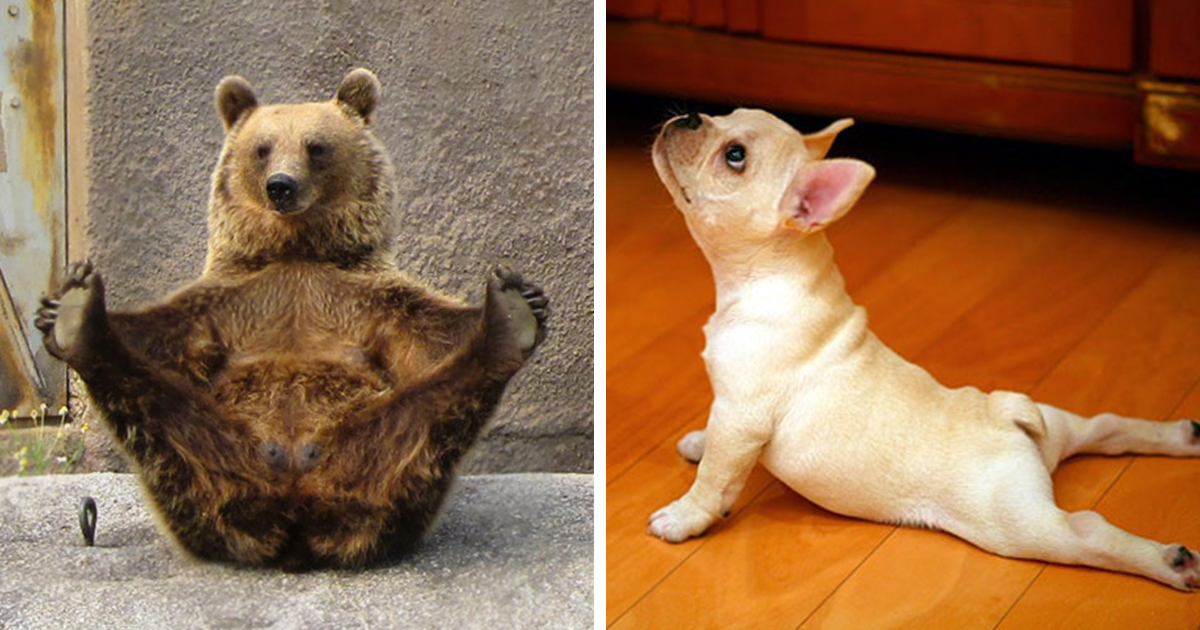 104 Animals That Do Yoga Better Than You