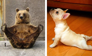 15+ Animals That Do Yoga Better Than You