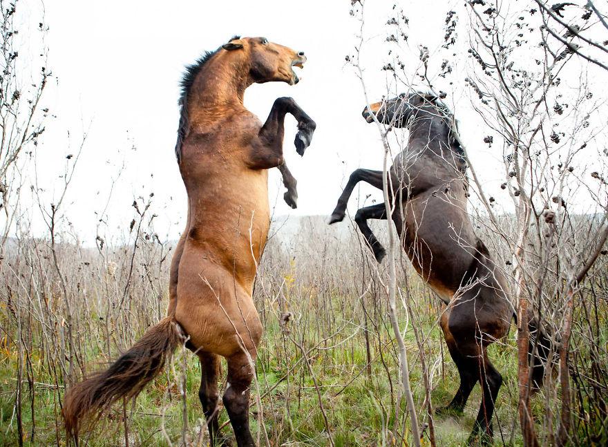 I Stalk The Wild Ones