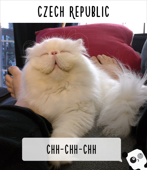 How People Call Cats In The Czech Republic