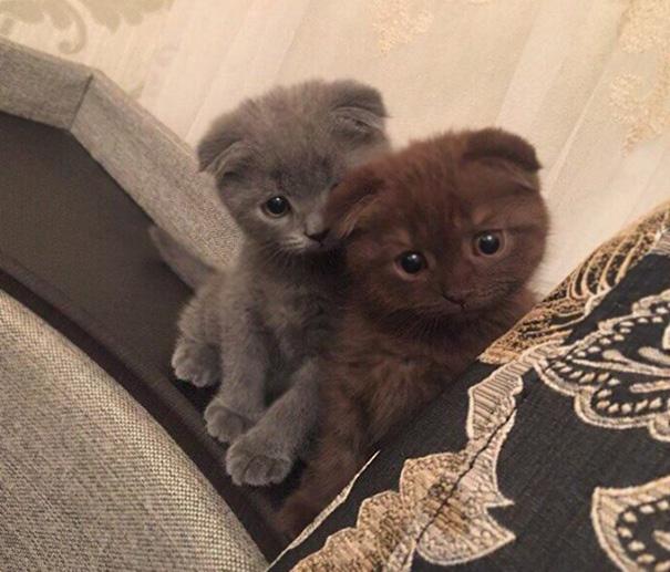 Double Cuteness