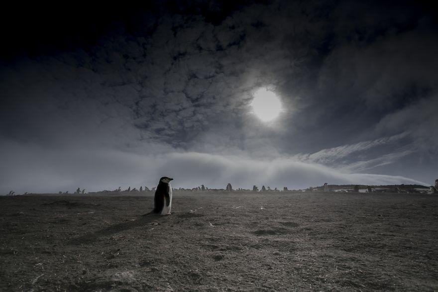 D'un pingouin à l'autre DSC03546-57c6a8086e3ca__880