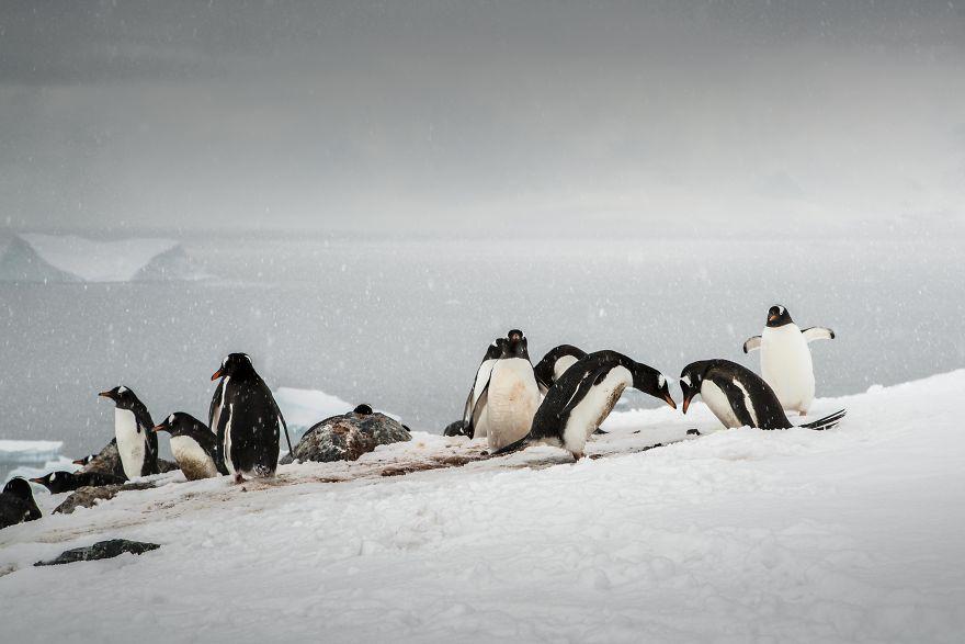 D'un pingouin à l'autre DSC03935-57c6a7d0ab56a__880