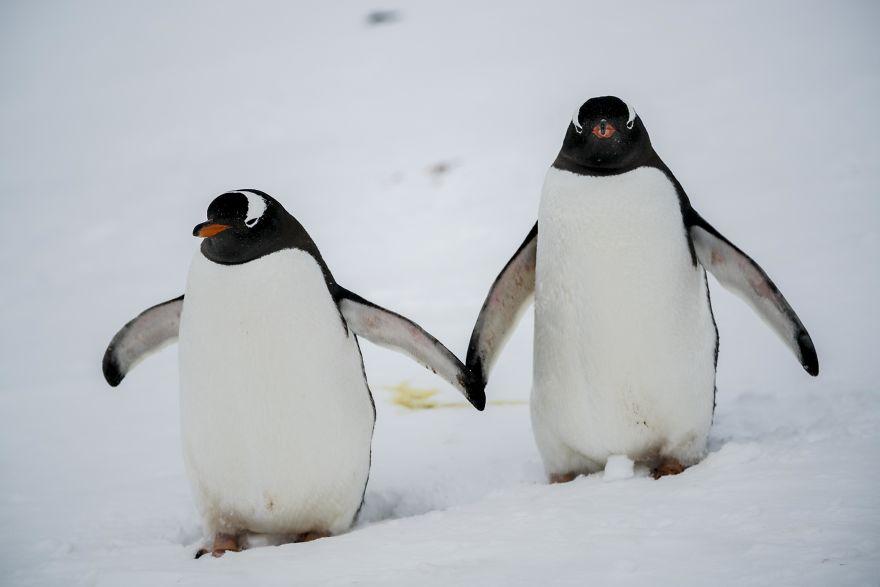 D'un pingouin à l'autre DSC03997-57c6a7ab401ae__880