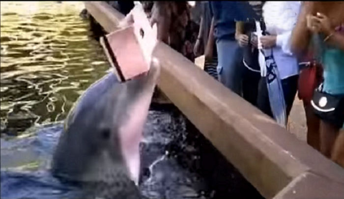 Dolphin Snatches Ipad