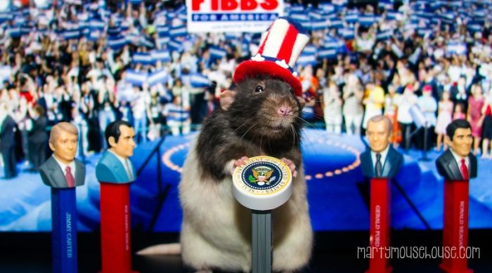 Vote Fibbs – The Best Candidate For President In This Crazy Election