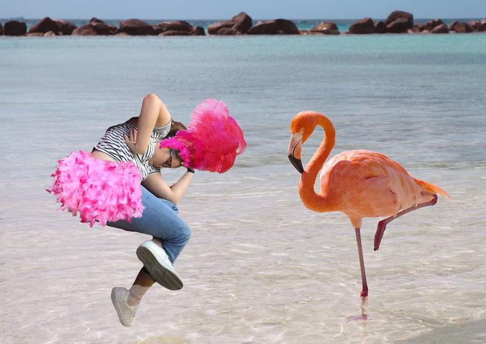 Flamingo Harmony