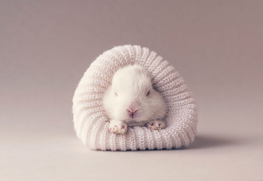 I did a newborn photo shoot with my baby bunny bored panda