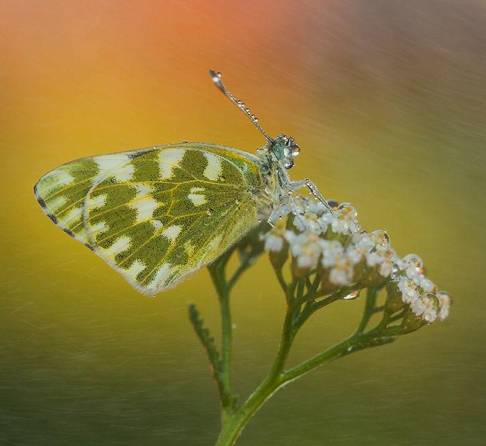 The Beautiful Nature IMG_1291-Kopia-57a501a407fef__700.jpg
