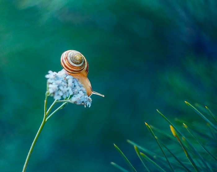 The Beautiful Nature IMG_4856-57a4fe4eada78__700.jpg