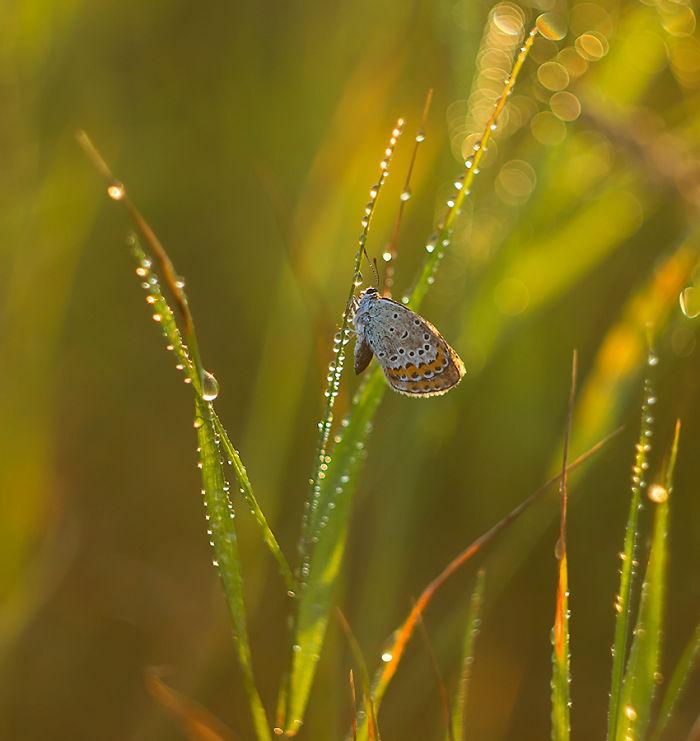 Fairy-tale World Of Butterflies