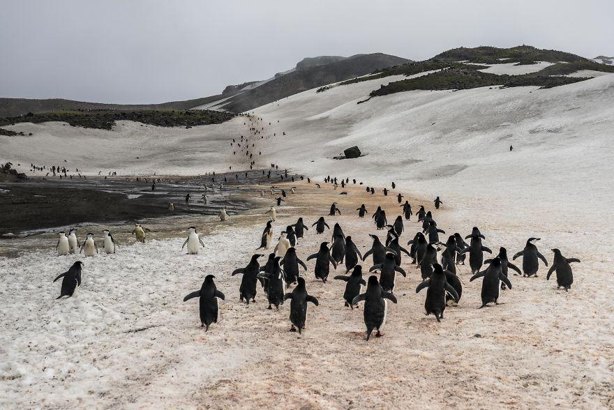 D'un pingouin à l'autre L1001140-57c6a71042280__880