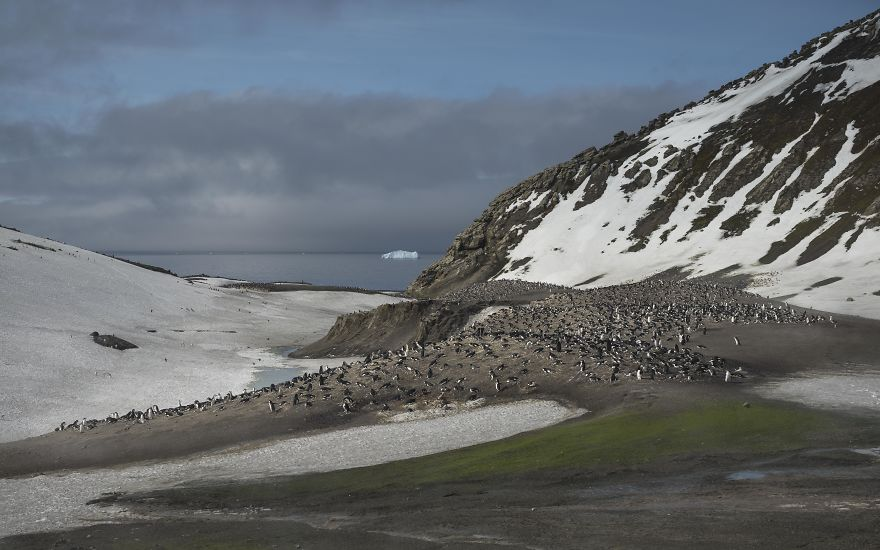 D'un pingouin à l'autre L1001175-57c6a6eee082f__880