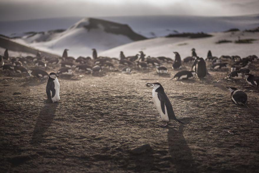 D'un pingouin à l'autre L1001295-57c6a6ce6fae0__880