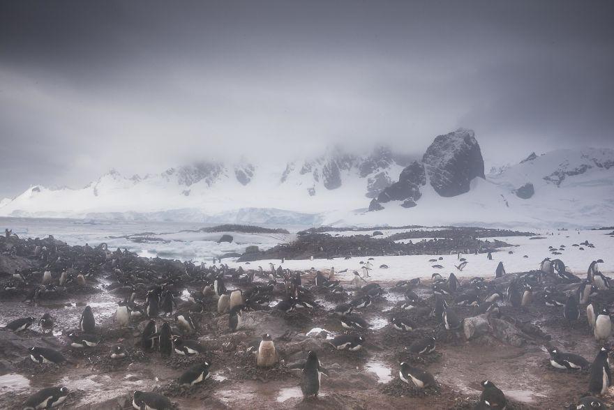 D'un pingouin à l'autre L1001892-57c6a69d8d950__880