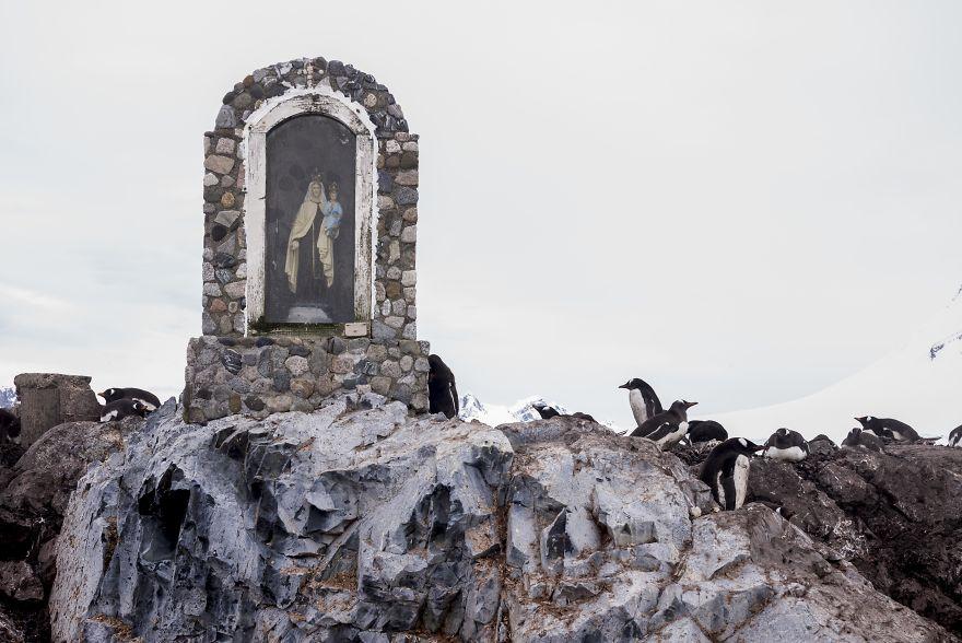 D'un pingouin à l'autre L1002275-57c6a6470c73c__880