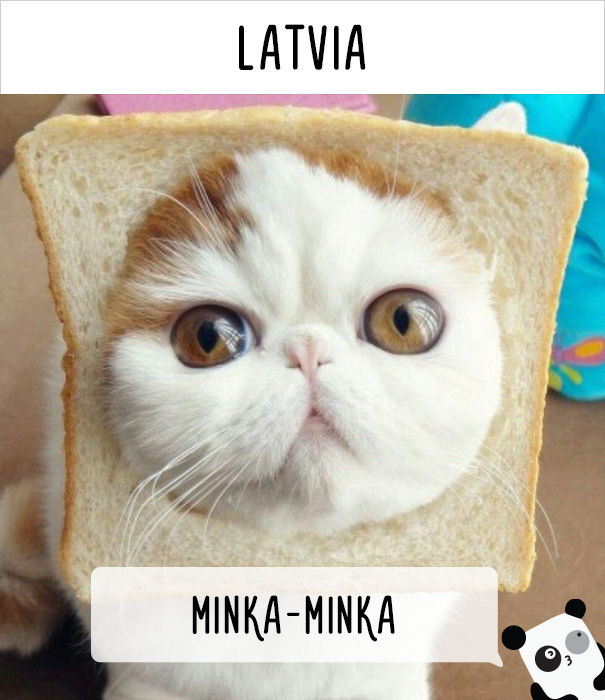 How People Call Cats In Latvia