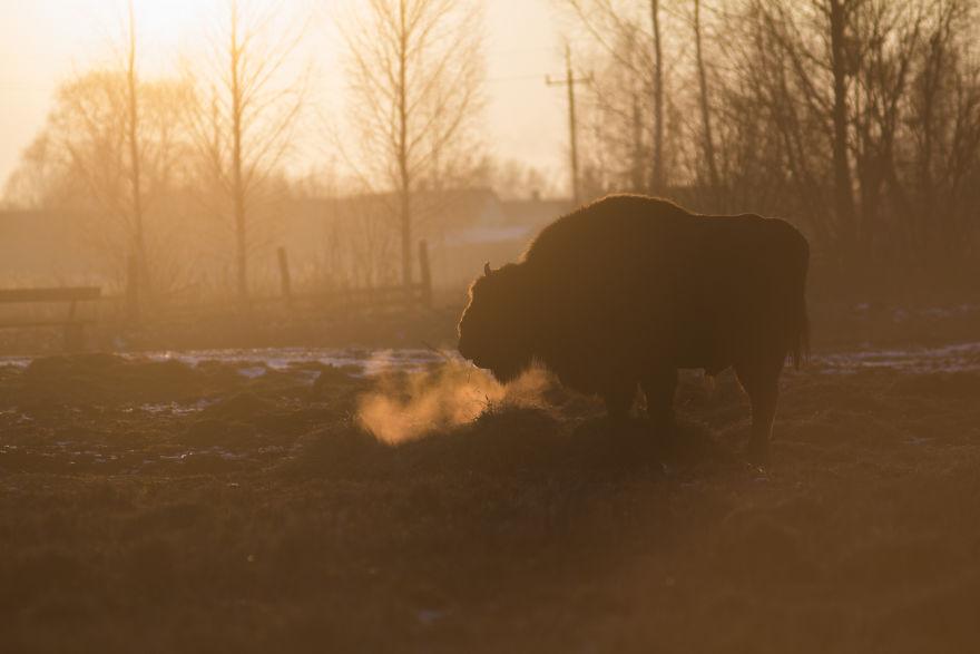 I Show The Diversity Of Polish Nature Through Photography