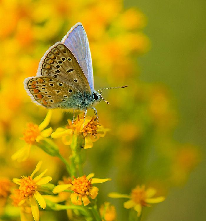 I Photograph Butterflies Of Poland