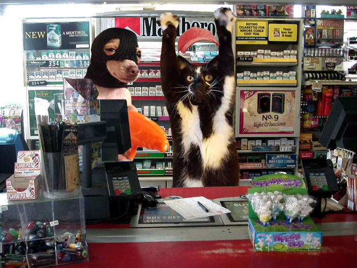 Store Clerk Kitty Is Having A Bad Day...