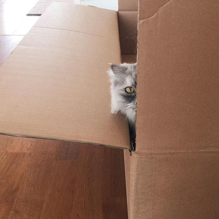adopted-cat-fur-persian-halloalice-11