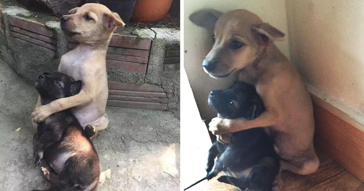 Stray Puppies Won't Stop Hugging Each Other Since They Were Rescued | Bored Panda