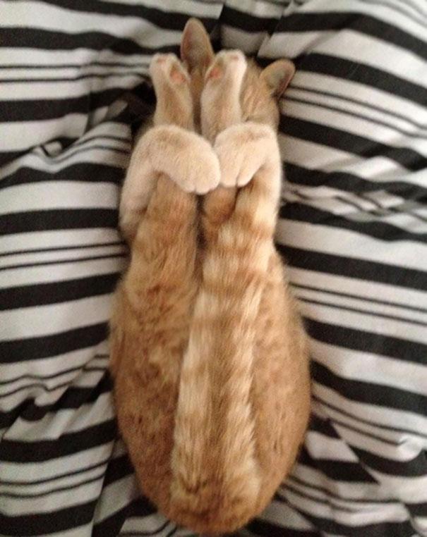Just My Cat Doing Yoga