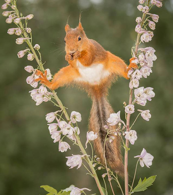 Some Serious Squirrel Splits