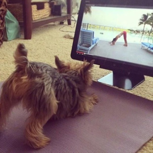 This Yorkie Learns Fast