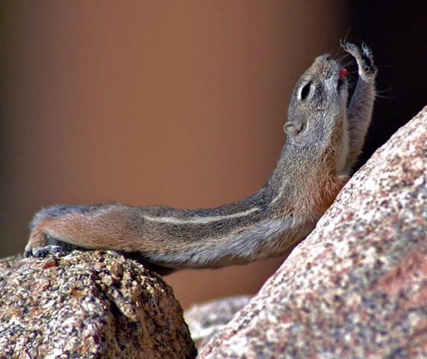 Chipmunk Yoga