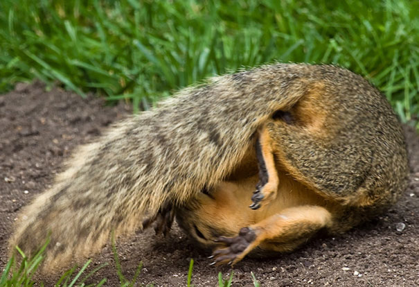 Just A Squirrel Doing Some Stretching