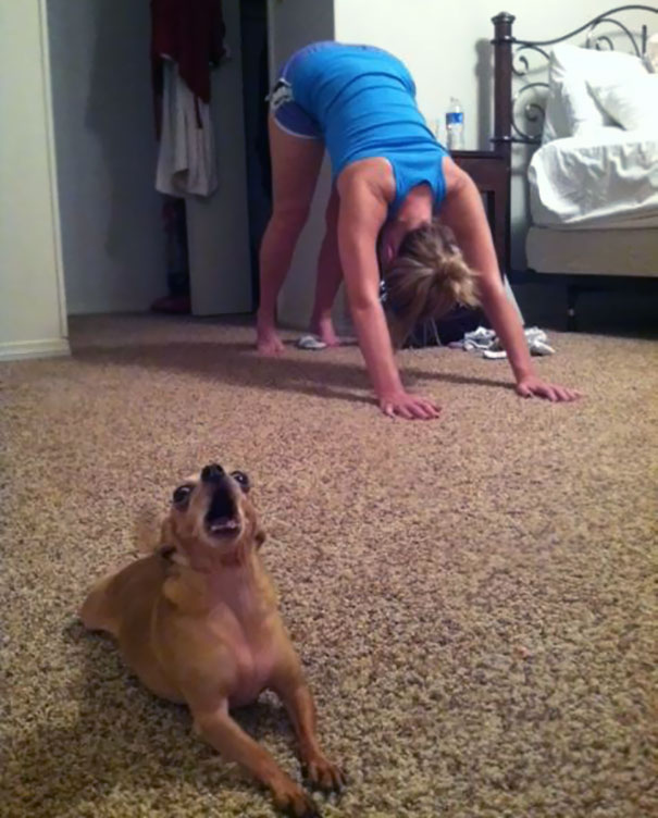 Our Derpy Dog Likes To Do Yoga Too