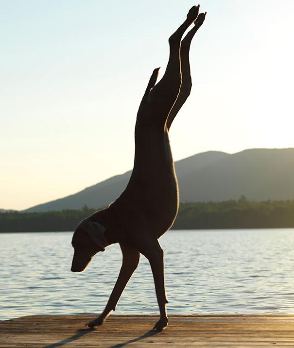 Man Ray Doing Handstand Yoga Pose