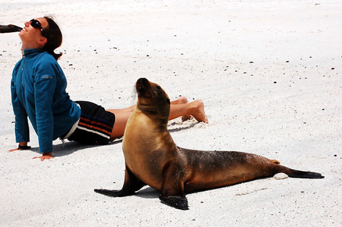 Yoga With Sea Lion