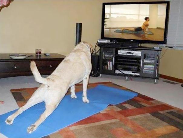 Yoga For Beginner Dogs