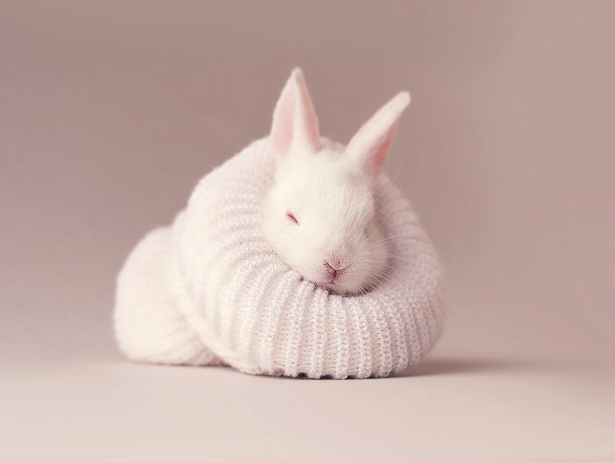 Woodland Bunny Rabbit by Lila & Lola Art Print | Pop Motif