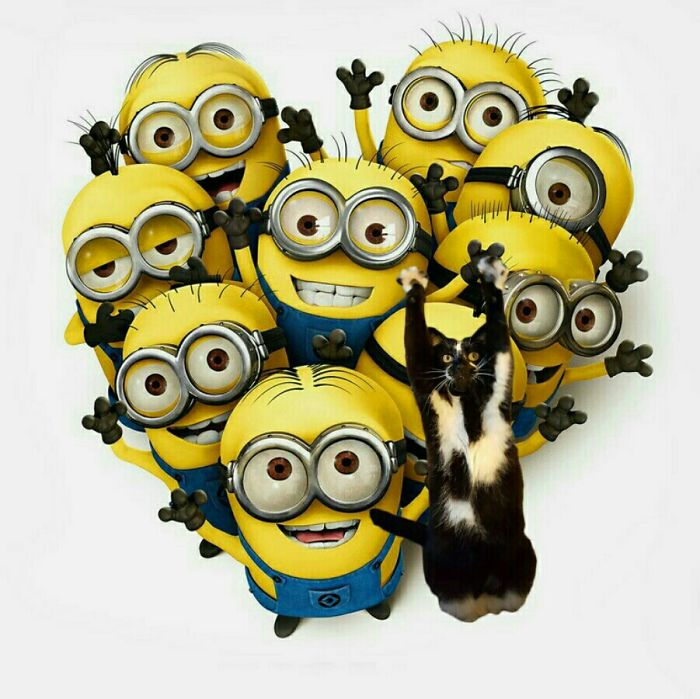 Minions Have A Pet! ????????