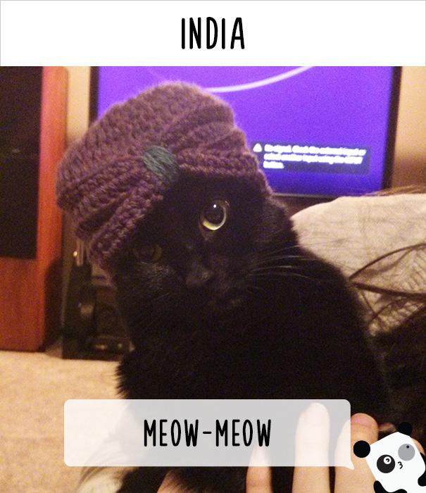 kawaii cat girls