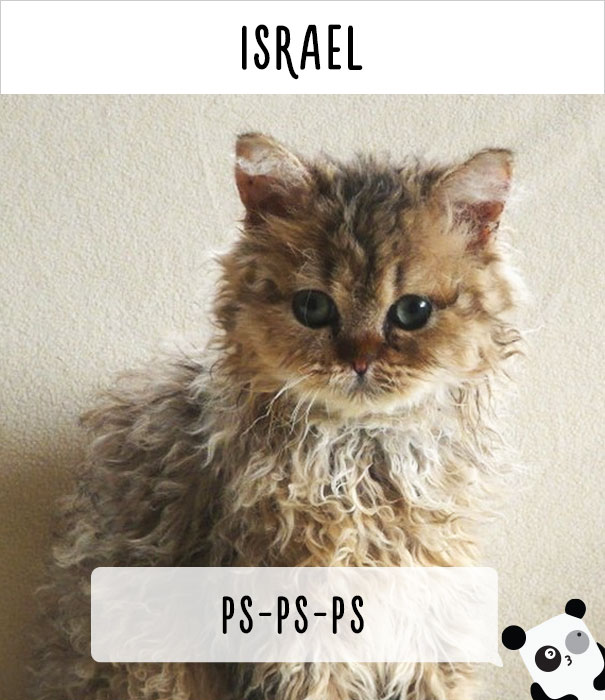How People Call Cats In Israel