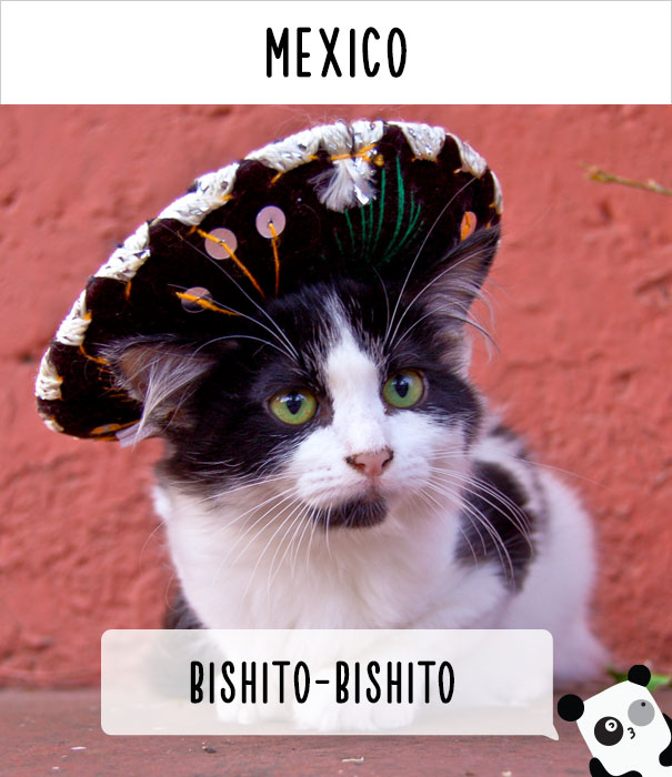 How People Call Cats In Mexico