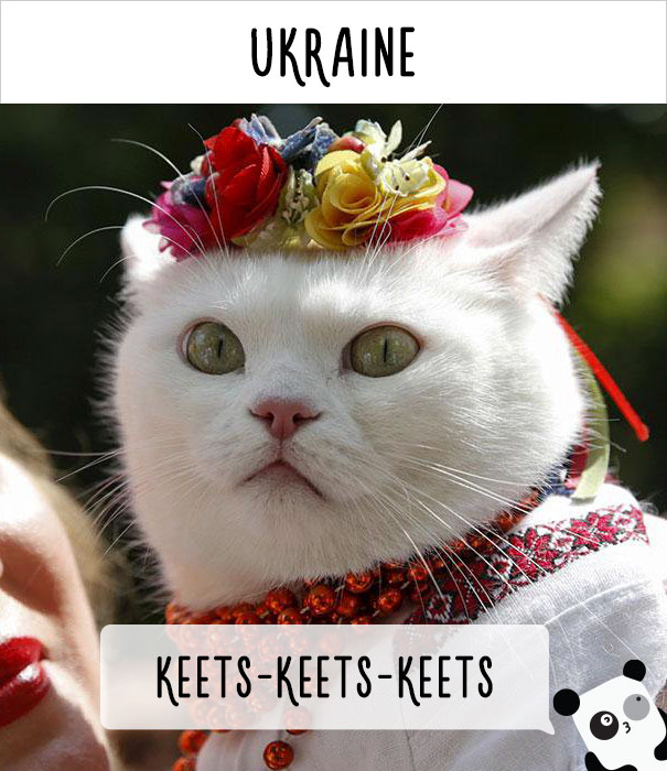 How People Call Cats In Ukraine
