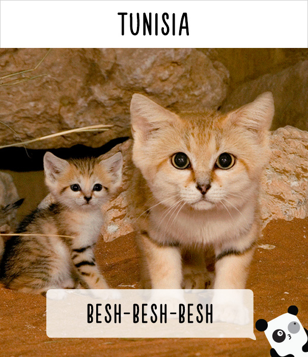 How People Call Cats In Tunisia