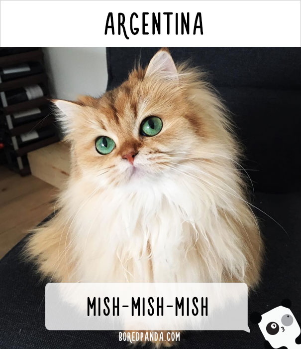 How People Call Cats In Argentina